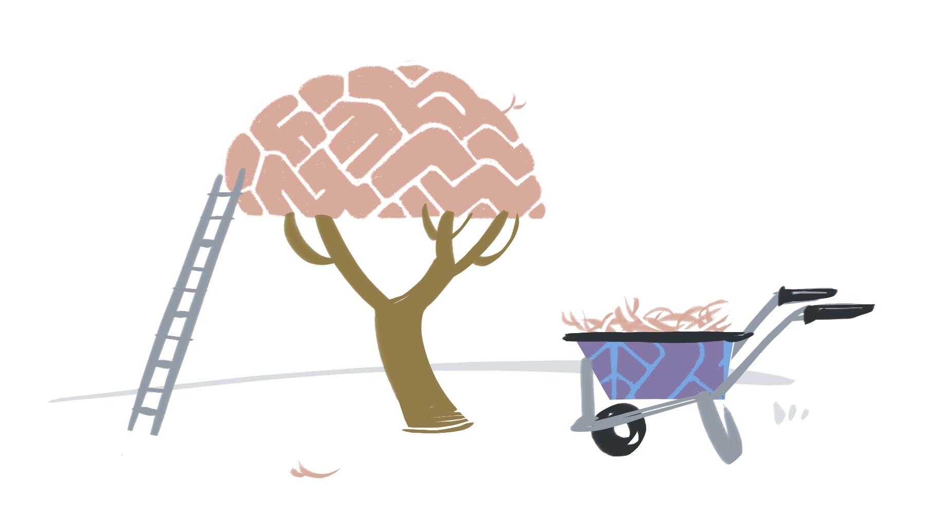 Groeien en snoeien: de hersenen van een kind